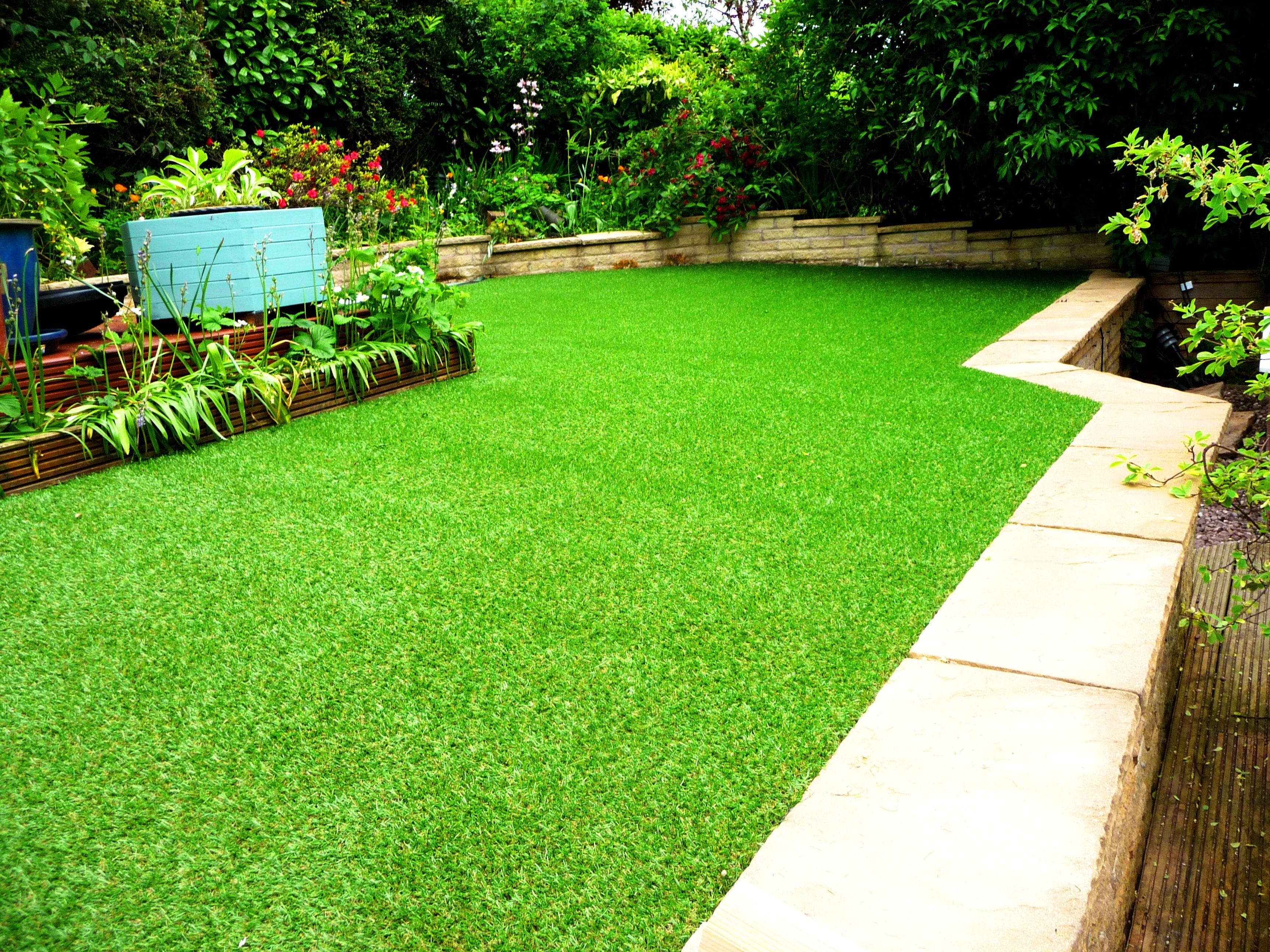 Low Maintenance Dog Friendly Backyard Ground Cover