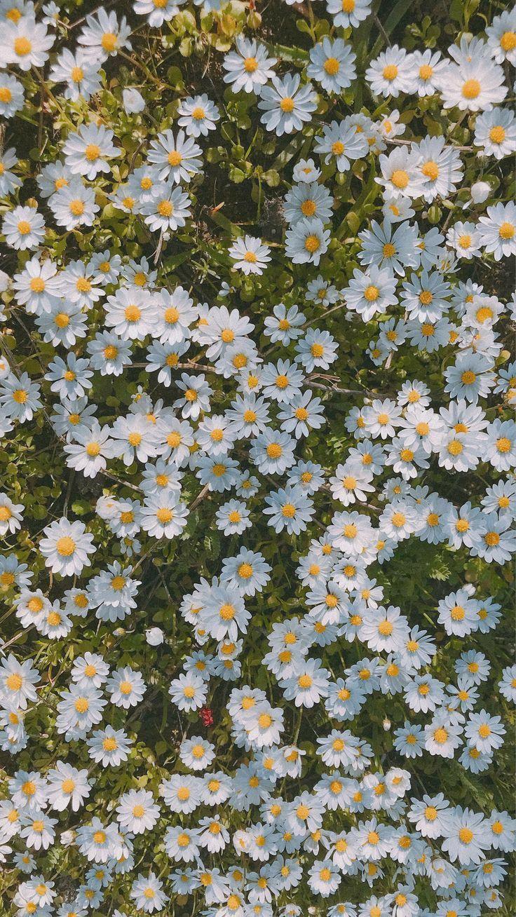 𝚝𝚑𝚎𝚐𝚒𝚛𝚕𝚒𝚗𝚝𝚑𝚎𝚖𝚘𝚞𝚗𝚝𝚊𝚒𝚗𝚜 ♡ in 2020   Daisy wallpaper ...