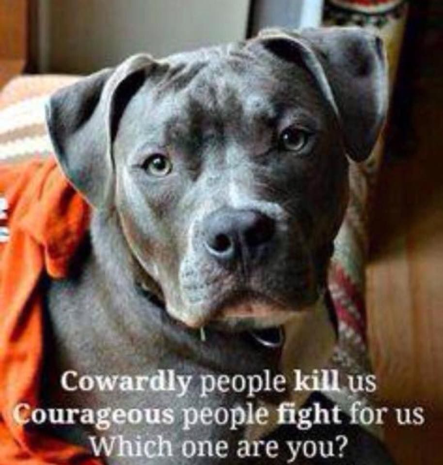 cowardly people kill us courageous people fight for us which one cowardly people kill us courageous people fight for us which one are you