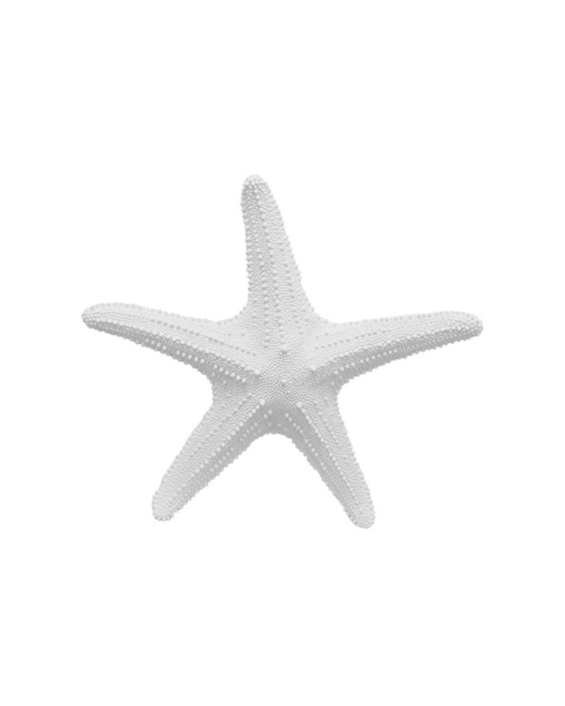 White Faux Taxidermy - The XL Starfish - Starfish Wall Decor - White Resin, $29.99 (http://www.whitefauxtaxidermy.com/the-xl-starfish-starfish-wall-decor-white-resin/)
