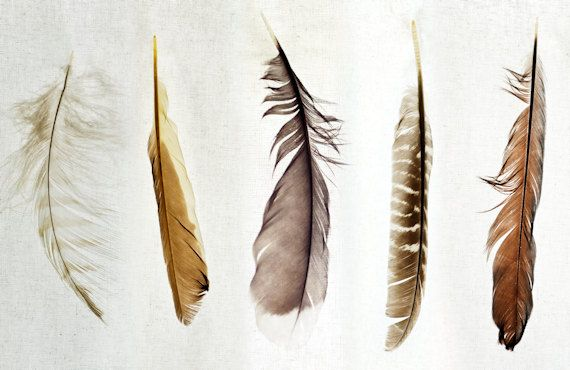Beautiful feathers by D.S. Brennan