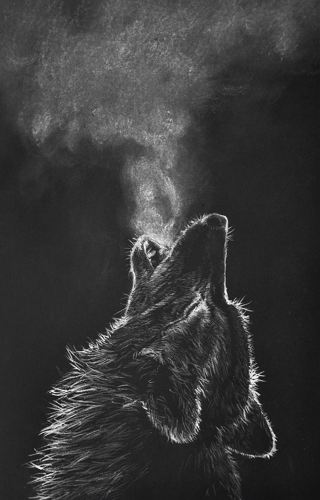 howling wolf | white color pencil drawing on black paper ...