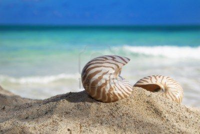 -two-nautilus-shells-on-beach-and-blue-tropical-sea-