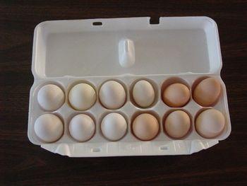 Dorking eggs from BackYardChickens