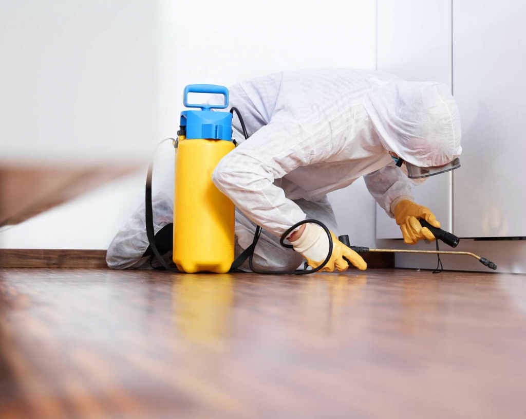 شركة تنظيف فلل في الفجيرة 0507260833 تنظيف بالبخار Termite Control Best Pest Control Pest Control Services