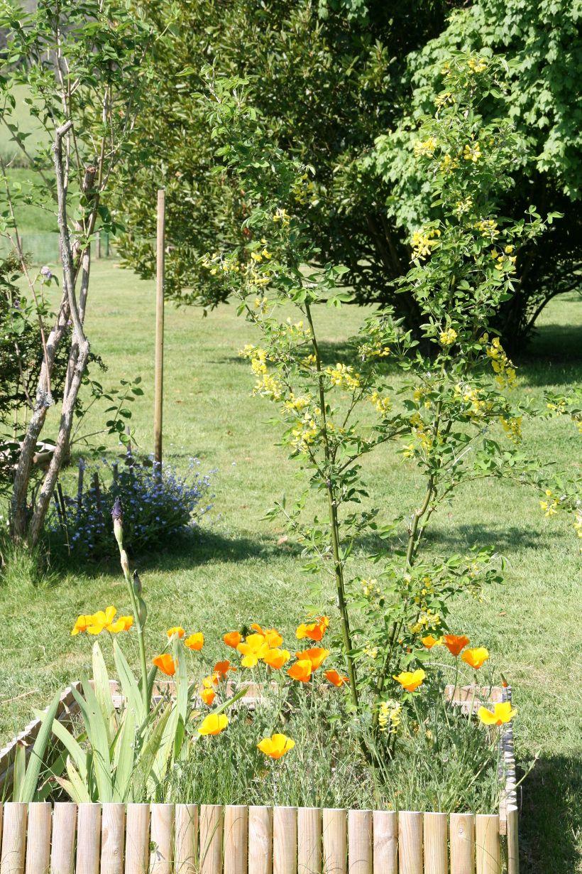 12 Vivaces Sans Arrosage Fleurs Sans Arrosage Jardin Facile Et