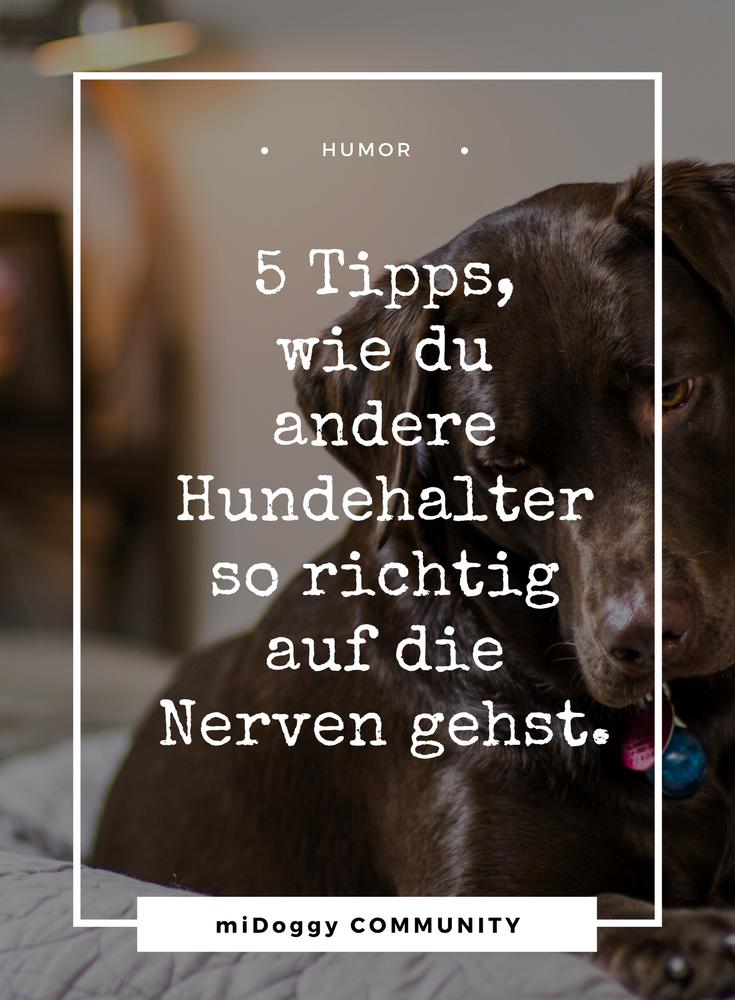 5 Tipps, wie du anderen Hundehaltern so richtig auf die