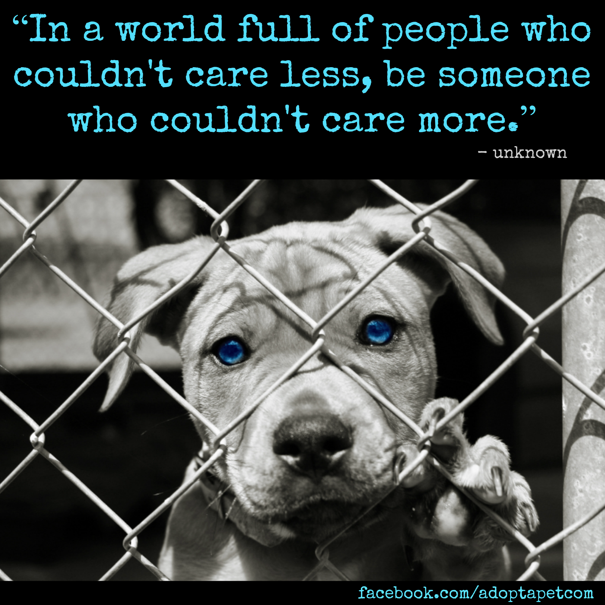 We can all do something! Adopting a pet isn't the only way