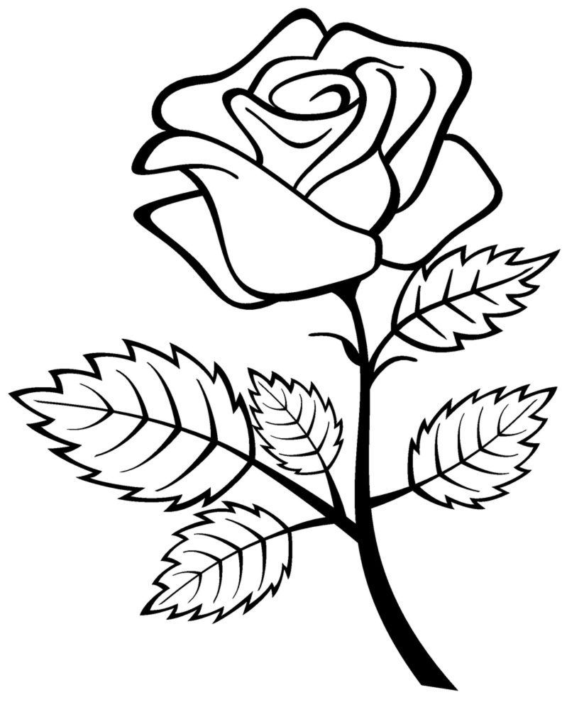 Free Printable Roses Coloring Pages For Kids Rose Coloring Pages Flower Sketch Images Flower Coloring Pages