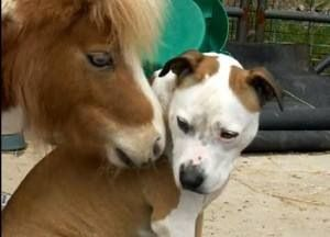 Horse with his dog
