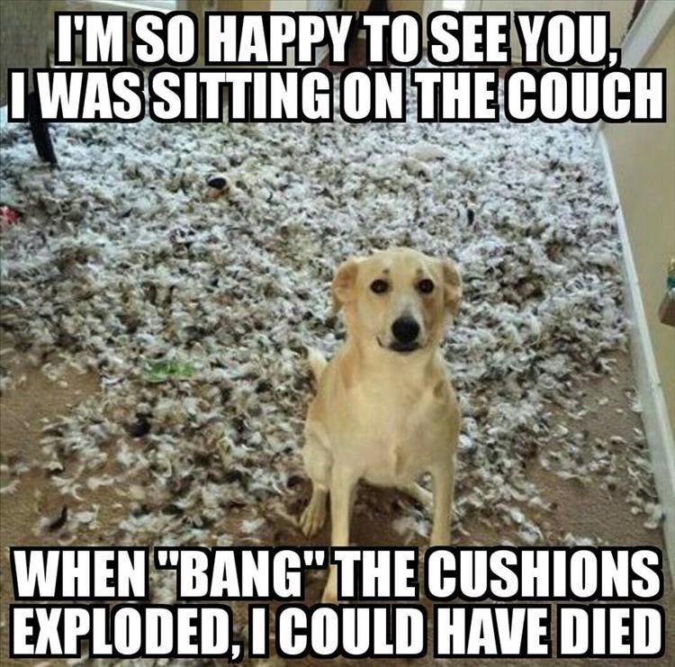 Adjustable Padded Dog Harness Cute Animal Memes Animal Jokes