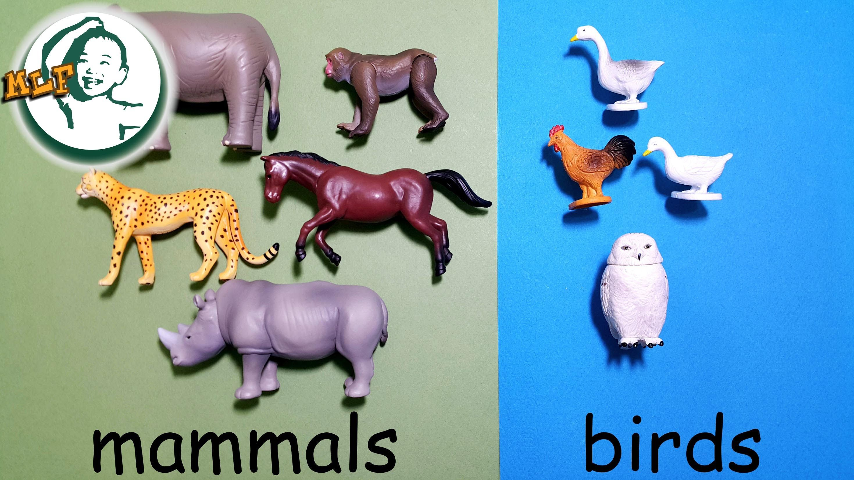 Learn animal classification and animal sounds for kids with Tomy Ania Animal part 2 |アニア アニマルだ