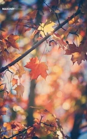 Photography Nature Autumn Scenery 45+ Ideas #autumnscenery