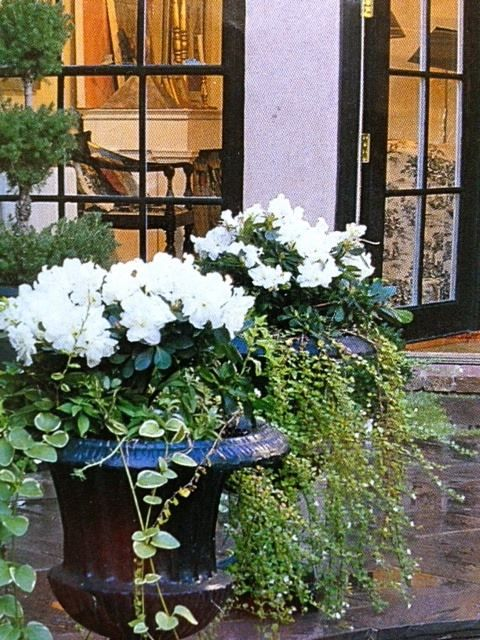 Classic combo in beautiful urns- via The Creeping Fig