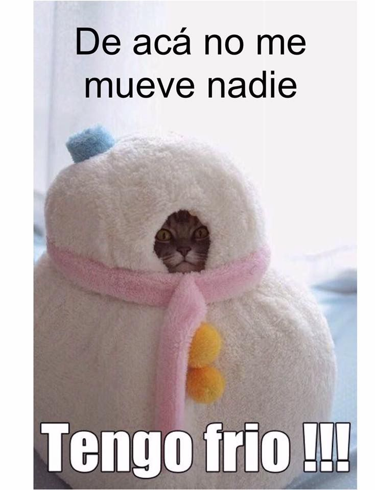 20046552 10154741992451304 6958747267353502775 N Jpg 734 960 Memes De Frio Tengo Frio Meme Gato