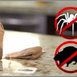 unbelievable-all-you-need-is-one-tea-bag-and-you-will-never-see-a-mice-or-spiders-in-your-house-again