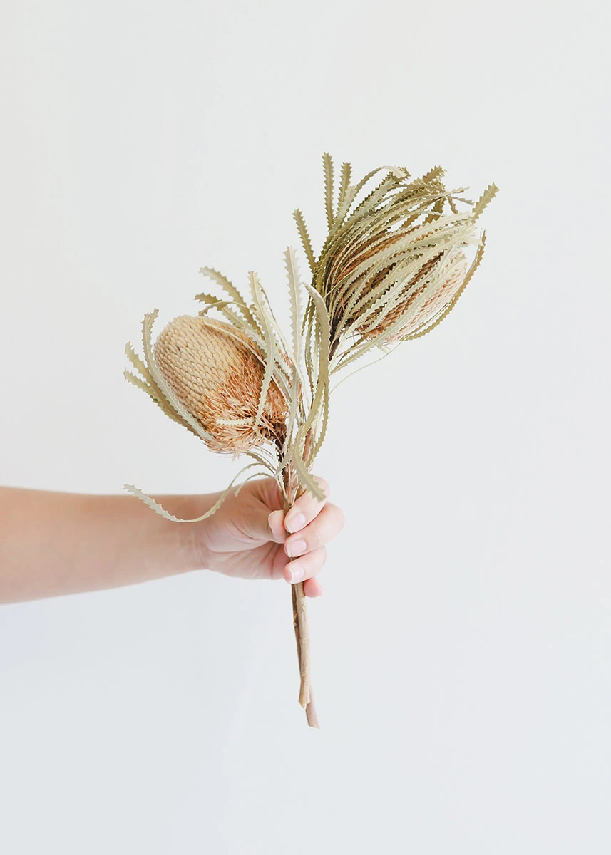 Natural Banksia Hookeriana Dried Wedding Flowers Afloral Com In 2020 Dried Flower Arrangements Floral Wedding Decorations Flower Arrangements