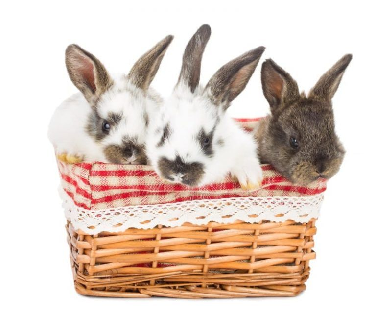 Best Toys for Rabbits to Play With 15 DIY & StoreBought