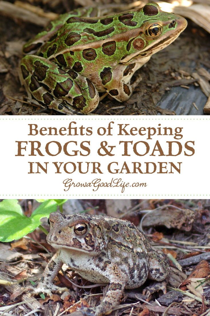 How to Attract Frogs and Toads to Your Garden | Garden ...