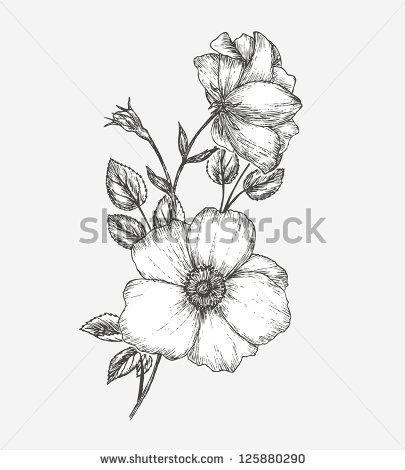 Botanical Prints Black And White Wild Rose Google Search Wild Rose Tattoo Apple Blossom Tattoos Flower Drawing