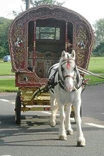 Gypsy wagon & horse