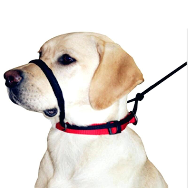 Sporn Dog Harness Wholesale Home Improvement Stores Near Me Dog