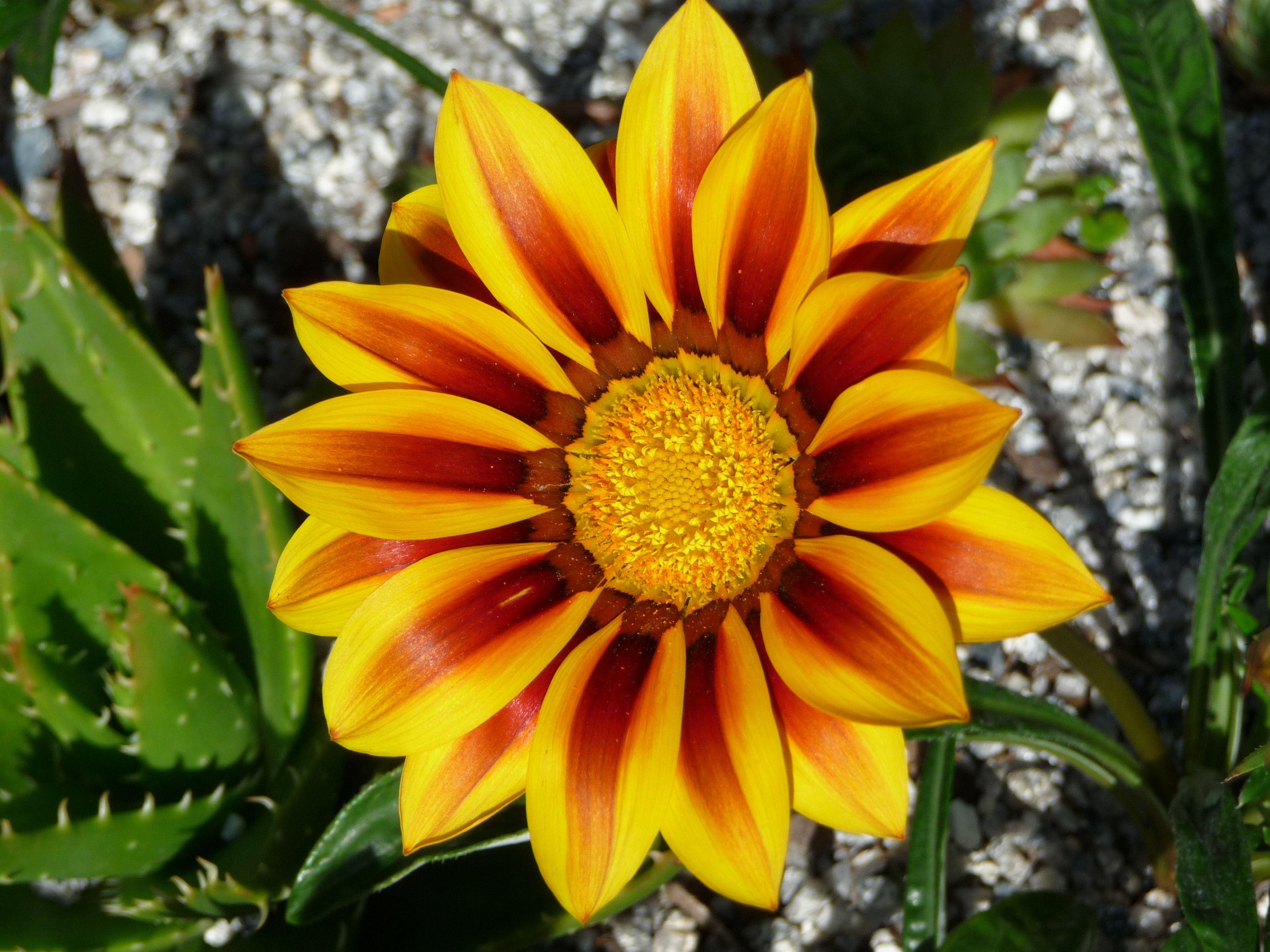 Yellow flower oxford uk flowers from around the world pinterest yellow flower oxford uk izmirmasajfo