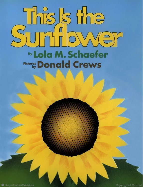 kindergarten sunflower booklet