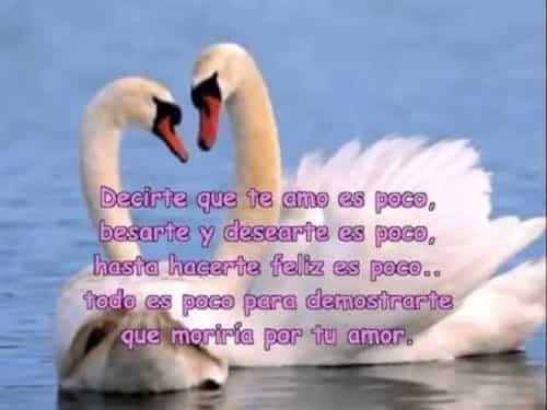 Versos De Amor Cortos Y Bonitos Para Enamorar Versos De Amor