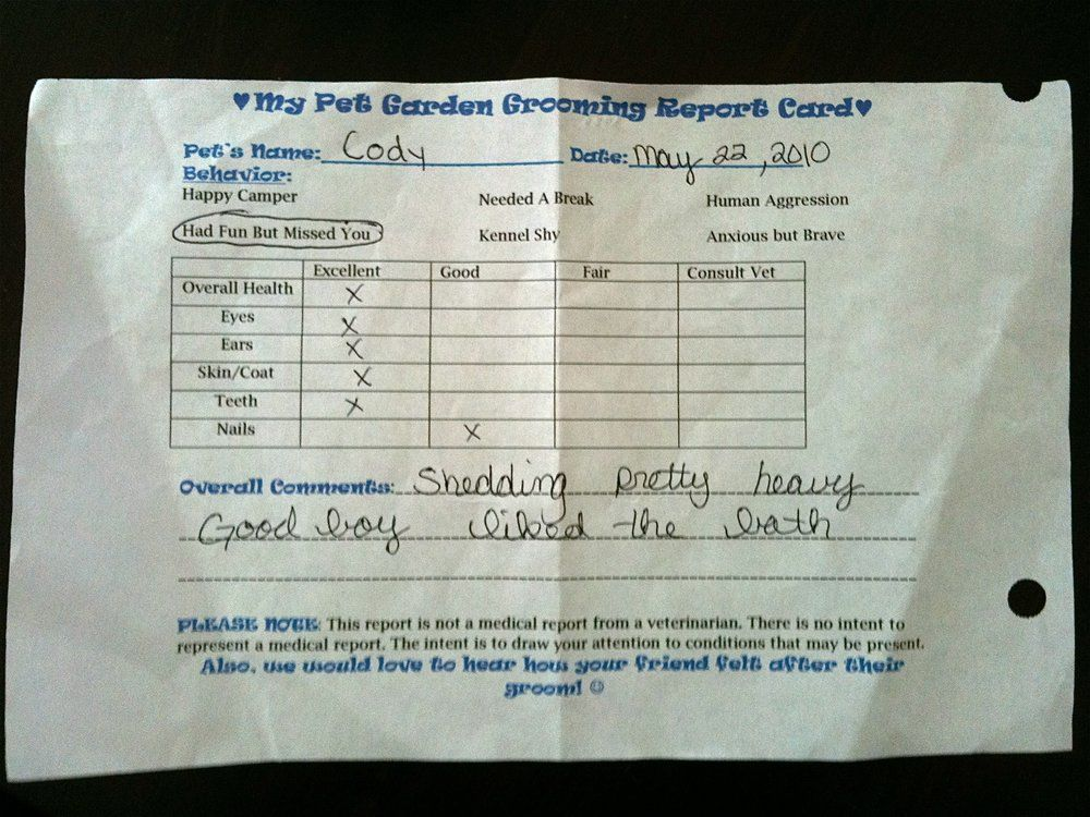 My Dog S Grooming Report Card Dog Grooming Report Card Template