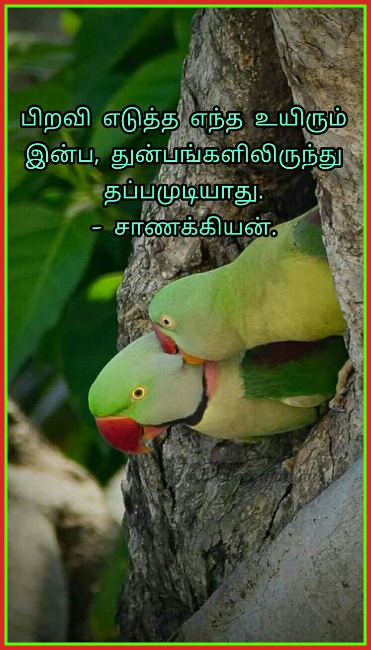 Pin by Malar Tr on Quotes in Tamil Beautiful birds