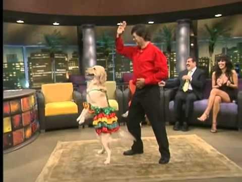 Amazing Dog Dancing Salsa On Sabado Gigante Show Youtube