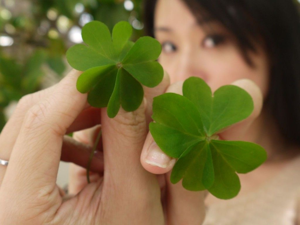 Cindy Found One Four Leaf Clover And One Five Leaf Clover All In One
