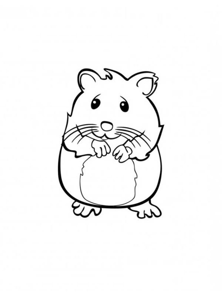 Hamster Coloring Pages Best Coloring Pages For Kids Animal Coloring Pages Halloween Coloring Pages Dog Coloring Page