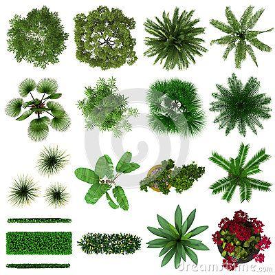 Plants Top View Png Arboles Y Arbustos Diseno De Jardin Disenos De Unas
