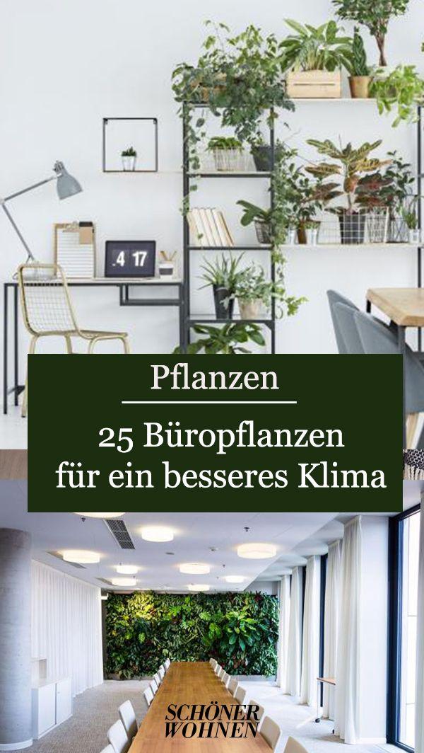 Photo of 25 Büropflanzen für ein besseres Klima