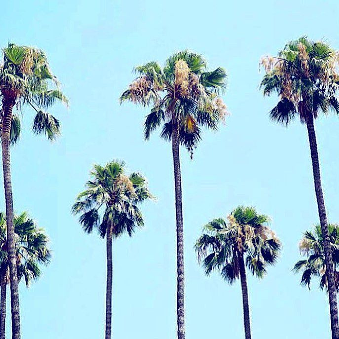 Blue skies X palm trees  just add a #Vizcaya bikini  #vizcayaswimwear #Malibu #california #vacation #jamaica #cancun #vacationplanning #holiday #getaway #summer #melbourne #sydney #nsw