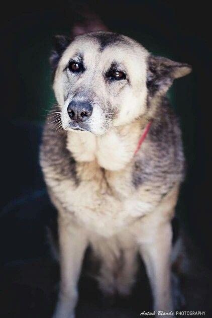 La experiencia - antua blonde photography -  fotógrafo solidario - barcelona - animal - fotos - reportajes - animal de compañía - maresme - cat - gat - gato - dog - gos - perro