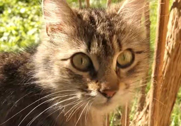 Flea Powder For Cats
