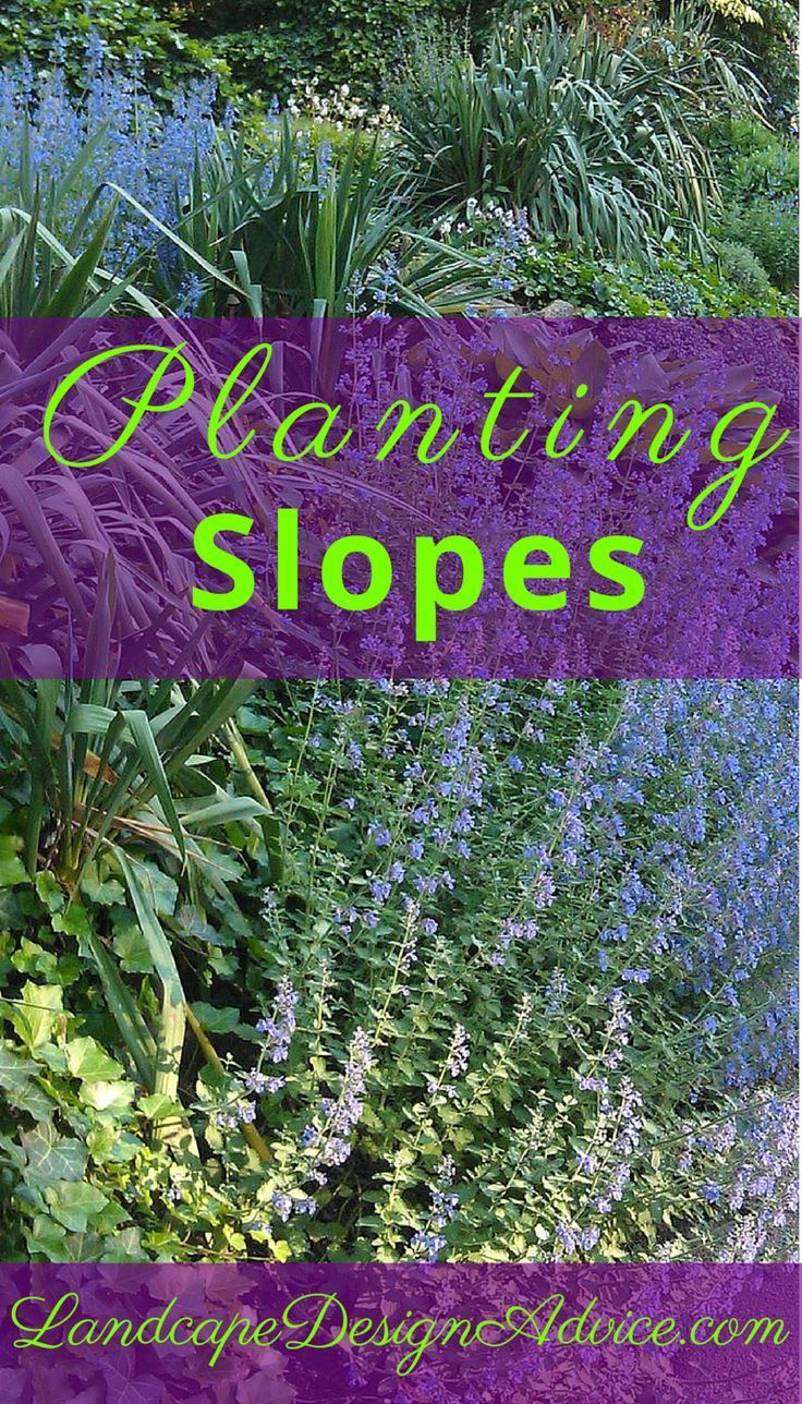Planting a slope successfully can be done. Use drought tolerant ...