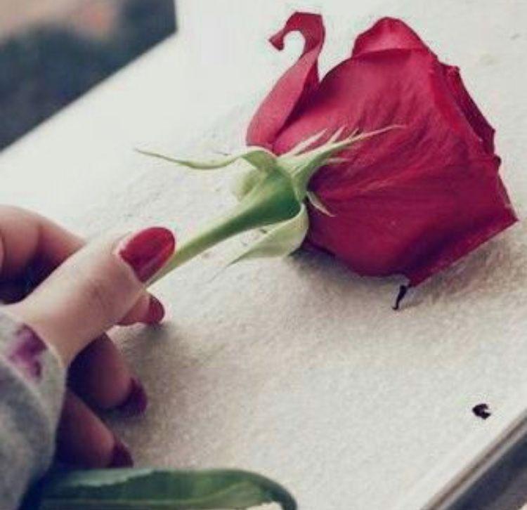 Pin By Rahanas Irfaniya On Rose Beautiful Flowers Wallpapers Red Roses Beautiful Flowers