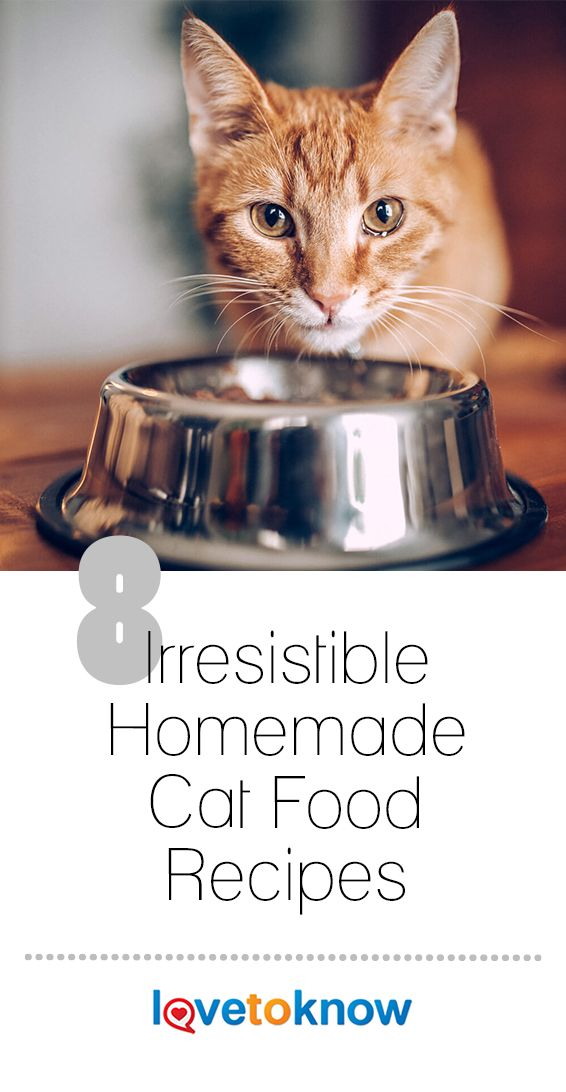 Preparing #homemade #catfood Can Be A Real Treat For Your
