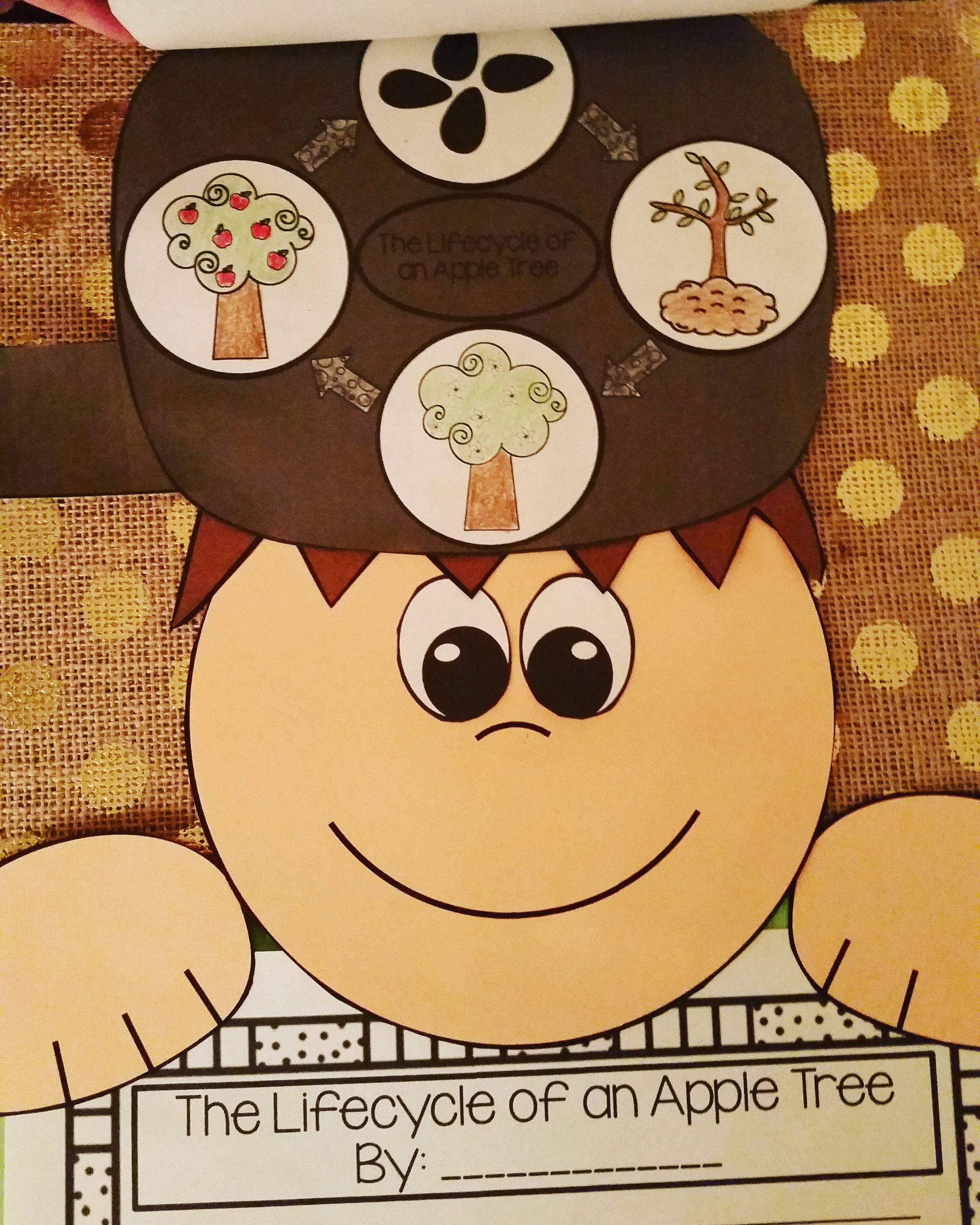 Johnny Appleseed Life Cycle Of An Apple Tree Writing