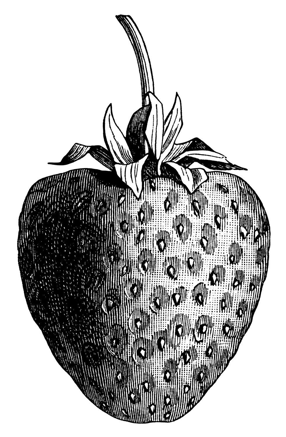 vintage strawberry clip art, black and white graphics ...
