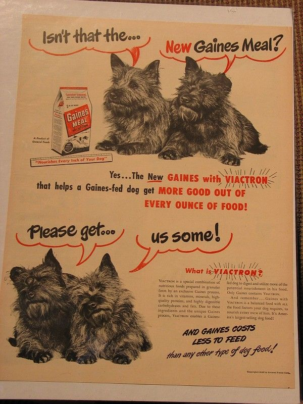 Old Gaines Meal Dog Food Ad With Cairn Terriers Cairn Terrier