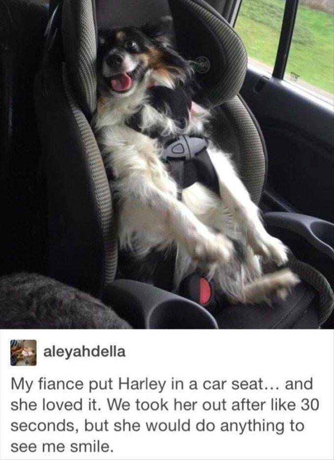 funny animal pics (3)