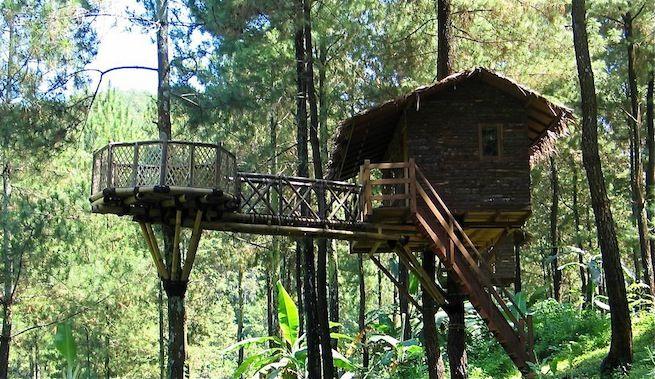 Pin by Rodrigo Gotera on CASA EN EL ÁRBOL Nelson Treehouse and - casas en arboles