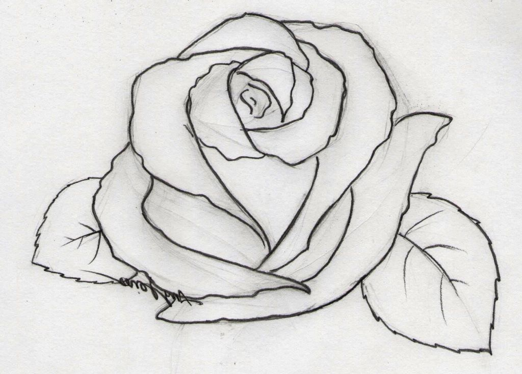 Good Easy Drawing Ideas Clipartxtras Roses Drawing Flower Sketches Pencil Drawings Easy