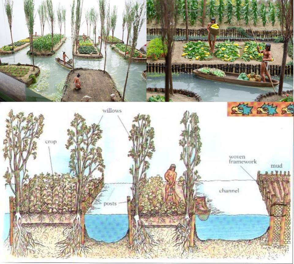 chinampa irrigation | Perma Pizzazz | Pinterest ...