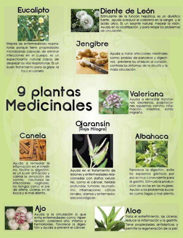 Fitoterapia La Herbolaria De Hoy Segunda Parte Plantas